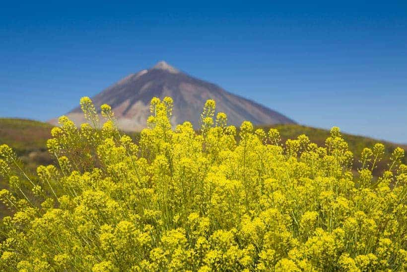 mount teide trips, how to visit mount teide, teide volcano, excursions, mount teide trips from costa adeje, mount teide trips from los gigantes