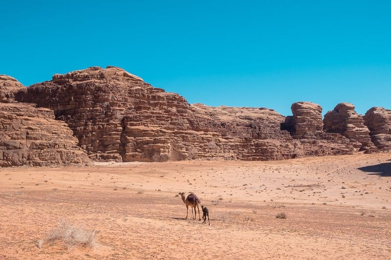 things to do in wadi rum, aqaba jordan what to do, aqaba to do