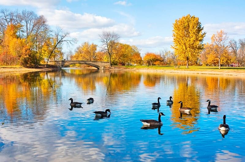 Best Hiking Trails in Wisconsin, ducks swimming in a pond