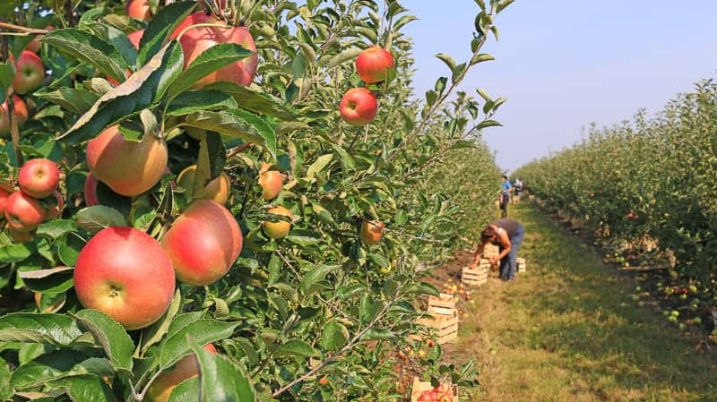 things to do near apostle islands, some people taking the Apple Orchard Tour