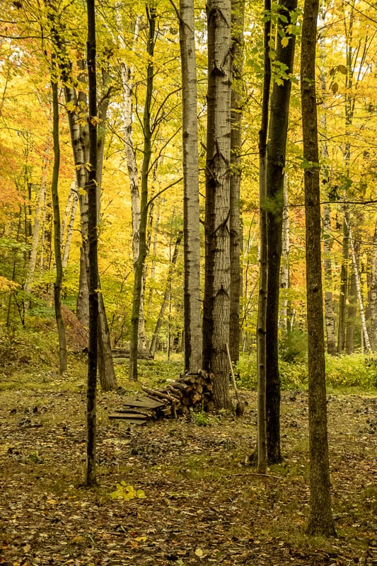 best trails in wisconsin, Pile of firewood and shovel alongside birch tree in forest located in the north woods of Wisconsin