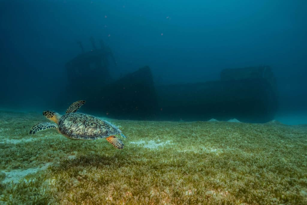 best things to do in sao vicente, mindelo, diving in sao vicente